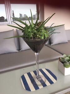 Succulent Room Decor 47 Display Terrarium 70 Cm High Brand New