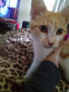 Free kitten Canley Heights Fairfield Area Preview