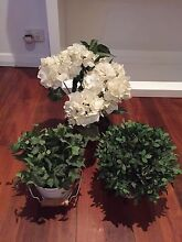 ASSORTED FAKE FLOWERS & PLANTS $25 Clayfield Brisbane North East Preview