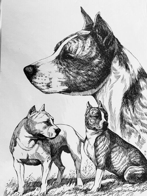 American Staffordshire Terrier Ltd Ed Print 11x17
