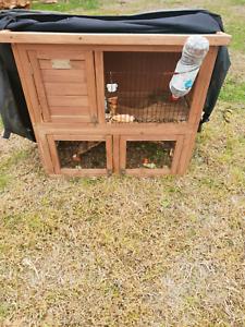 Guinea pigs ×2    cage Bendigo Bendigo City Preview