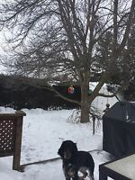 Looking for large tree removal