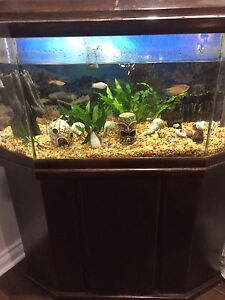 26 gall fish tank with fresh water