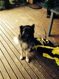 Dog Sitter in Craigieburn