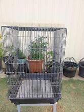 Black Parrot or Bird Cage Paralowie Salisbury Area Preview