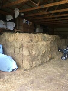 Small square bales for sales! Horse hay!