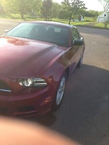 2014 MUSTANG 6Speed manual for $16200