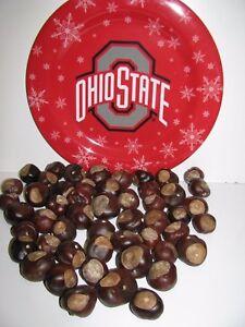 150  buckeye nut necklace craft OSU ohio state-oHIO GROWN