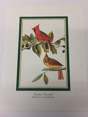Audubon - CARDINAL GROSBEAK Birds - Bird Print 25.5 cm x 19.5 cm Vintage Art