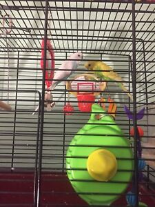 2 finches and their cage