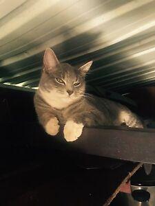 Kitten For Sale Redland Bay Redland Area Preview