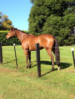 Race Horse Spelling close to Ballina Race Track Ballina Ballina Area Preview