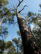 ONE OF A KIND-NOTHING WILL COMPARE Manjimup Manjimup Area Preview