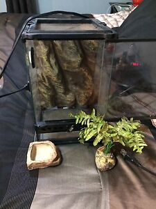 Small glass reptile home with heat