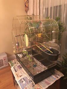 Lovebirds and European brass cage