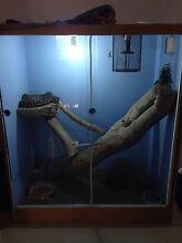 6 yo male Centralian Carpet Python (Bredli) + Enclosure Aldinga Beach Morphett Vale Area Preview