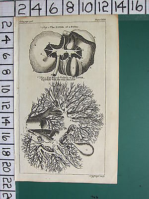 1754 ANTIQUE PRINT ~ ANATOMY THE LIVER OF A FOETUS BLOOD VESSELS GALL-BLADDER