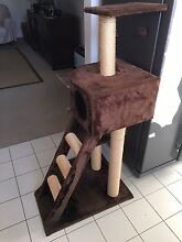Cat scratching Post Climbing Tree Gym Freshwater Manly Area Preview