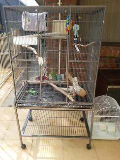 2 gorgeous quaker parrots for sale Modbury Heights Tea Tree Gully Area Preview