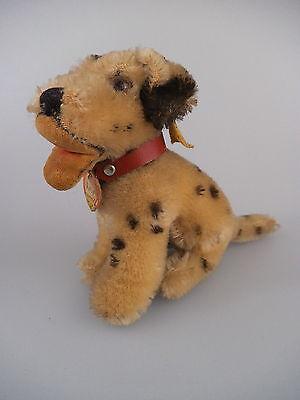 Steiff Hund Dalmatiner Dally 3310,00 - komplett mit KFS - 60er Jahre