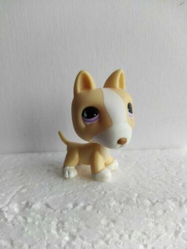 ★ little petshop lps ☆ chien bull terrier 860 hasbro  dog #geektradelpschien