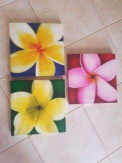 3 frangipani canvas prints