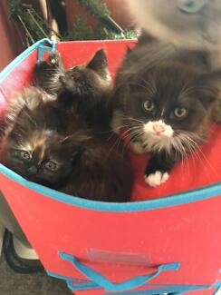 3 Kittens need a loving home