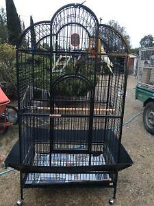 2 cockatiel's plus a large cage
