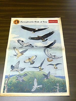 VINTAGE 1965 PHILADELPHIA INQUIRER THE WORLD WE LIVE IN PA BIRDS OF PREY PAPER
