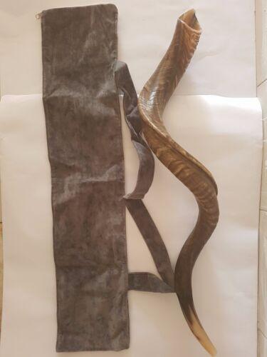 """Shofar Kudu Yemenite Horn 45"""" 114Cm Full Natural Israel Notes E+-,F+-,G+, + BAG"""