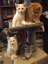URGENT URGENT RESCUED FOUR BEST FRIENDS NEED LOVING HOMES Riverwood Canterbury Area Preview