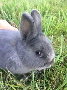 Dwarf rabbits.