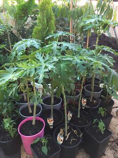 Plants for sale starting from $5