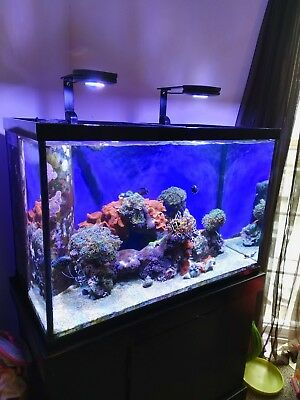 Saltwater Aquarium Setup (fish, coral, live rock, tank, stand, and equipment)