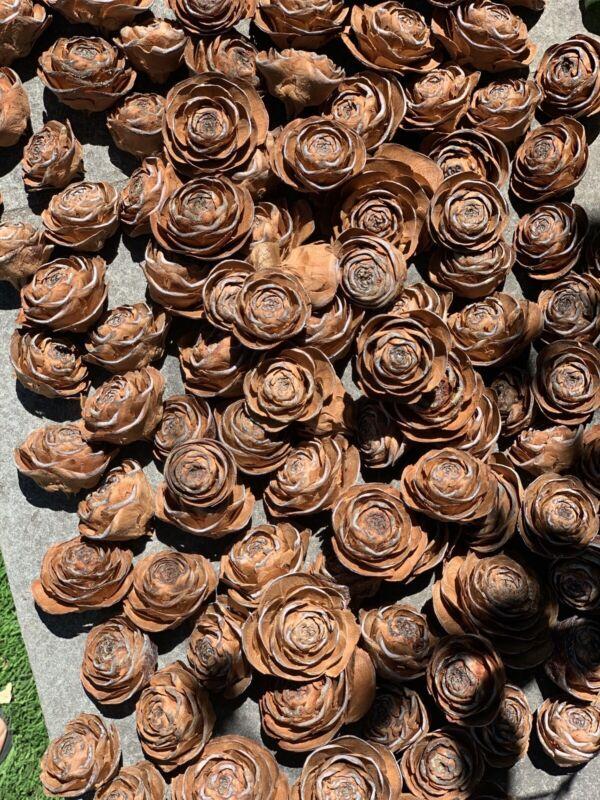 Rosette  pine cone