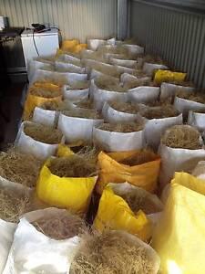 Birds nest grass **November Grass** (Swamp Grass) Quirindi Liverpool Plains Preview