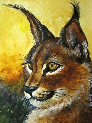 Watercolor Painting lynx Big Wild Life Cat Nature ACEO Art