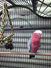 I adopt any unwanted birds Tullamarine Hume Area Preview