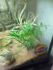 75 g tank w/ stand & dragon. Everything you need London Ontario image 8
