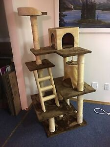 Beautiful 5 foot cat tree immaculately shape!
