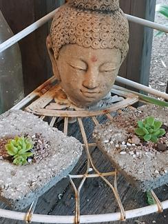 Small Succulents In Squarish Hypertufa Pots