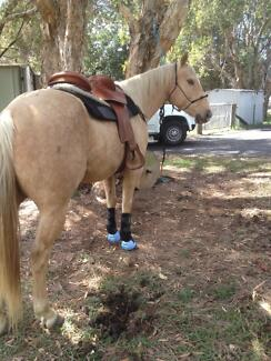 5yo Quarter Horse Gelding Cashmere Pine Rivers Area Preview