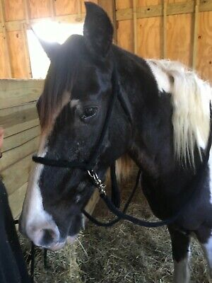 Black or Brown Leather Halter with Rose Gold Rope Accents Pony Cob Full Xfull