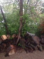 Tree removal tree pruning