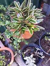 Terracotta pots & plants Southport Gold Coast City Preview