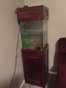 Fish tank with 11 golden fish
