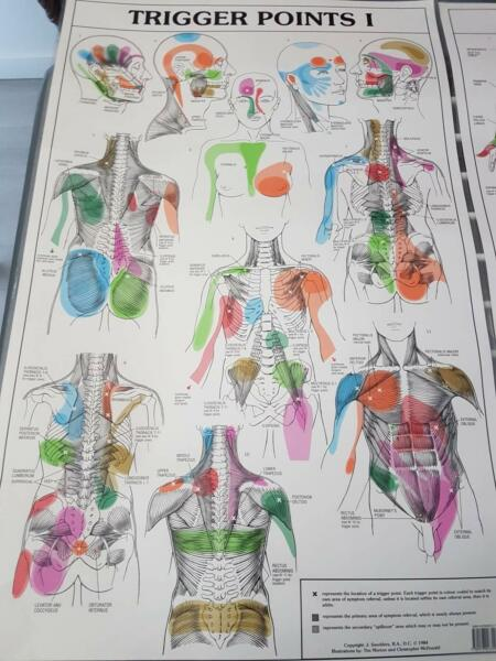 Trigger Points Chart Set Great Condition Anatomy Charts Gym
