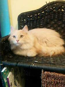 Neutered Male 8 months old