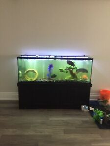 Large Fish Tank and fresh water fish (135 gallon tank)