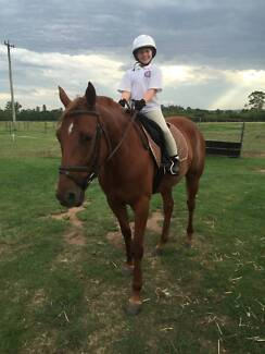 Banjo The Standardbred Camden Camden Area Preview